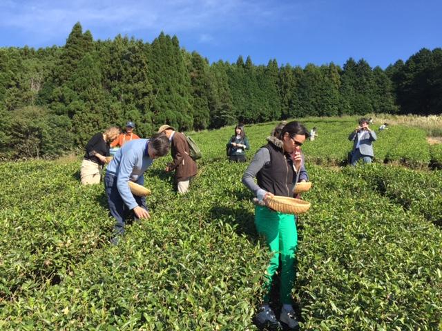 無農薬 有機栽培茶 和カフェ 遊茶庵