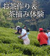 無農薬有機栽培茶 茶摘み体験